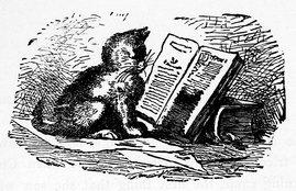 Kitten_reading_a_book[1].jpg
