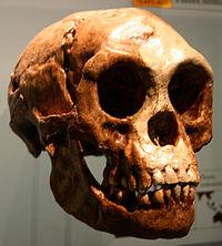 200px-Homo_floresiensis[1].jpg